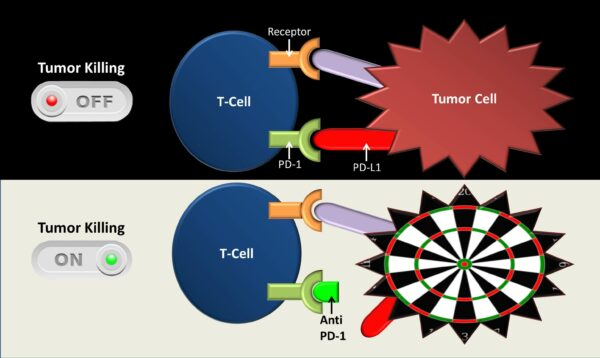 mecanism actiune inhibitori puncte control pd-1 pd-l1
