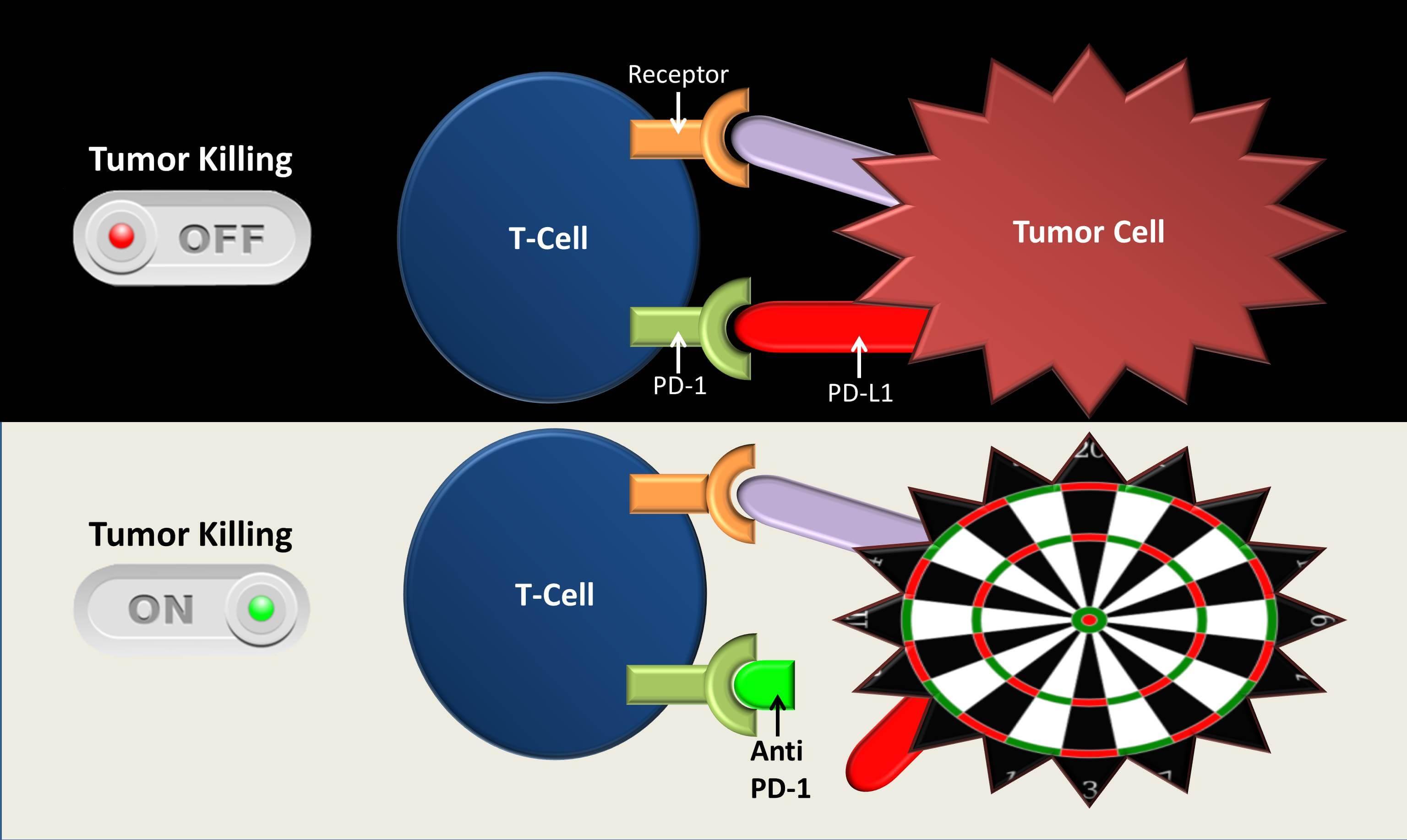 Mecanismul de acțiune al inhibitorilor punctelor de control pd-1 pd-l1