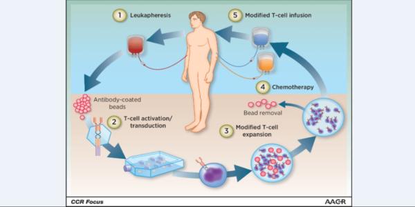 Mecanismul de dezvoltare al terapiei genice celulare