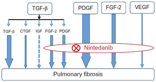 mecanism nintedanib inhibare factori crestere