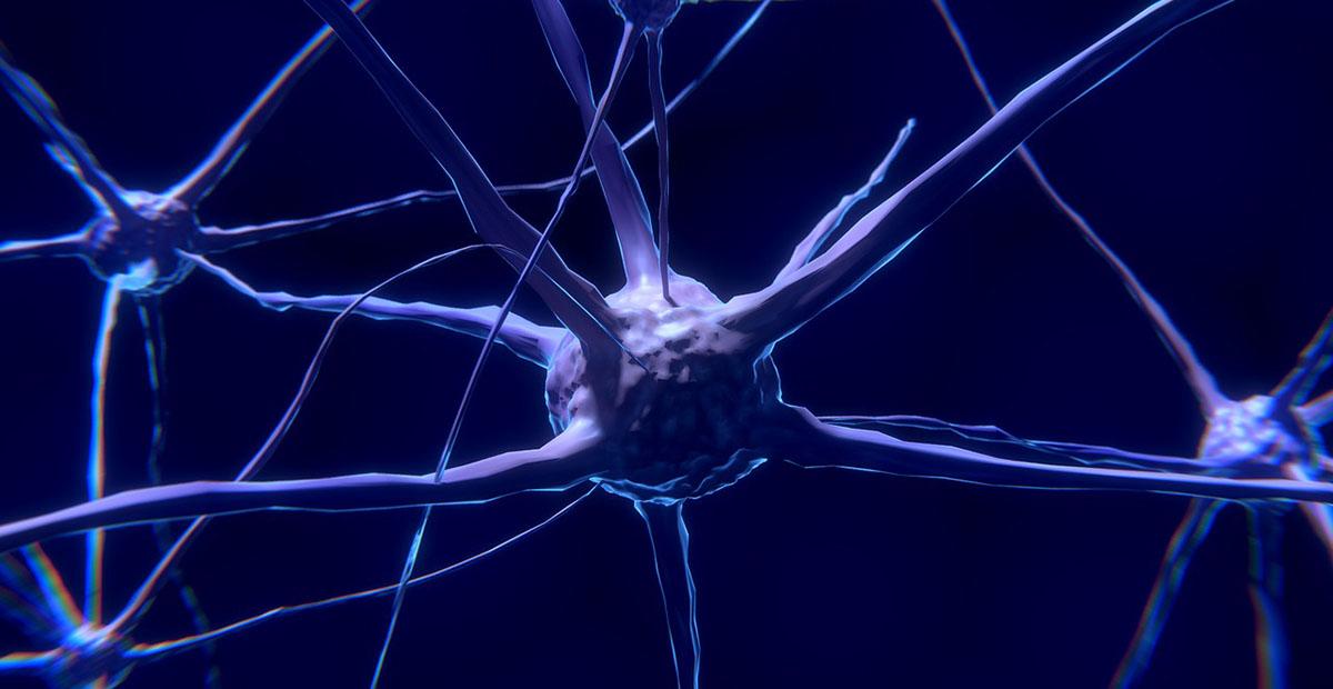 Neuron sistem nervos creier