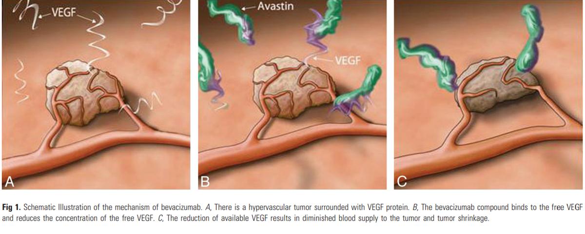 mecanism VEGF avastin bevacizumab