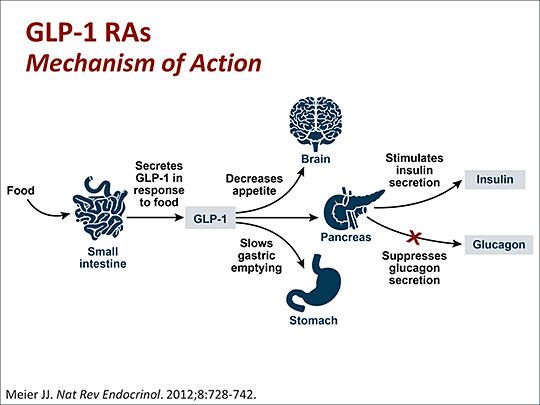 mecanism GLP1
