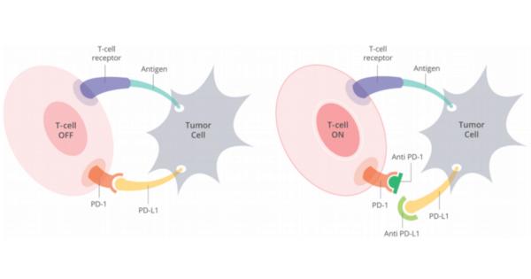 mecanism-actiune-inhibitor-pd-l1