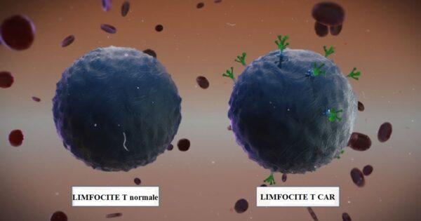 Aspectul limfocitelor T normale si antrenate sa prezinte CAR