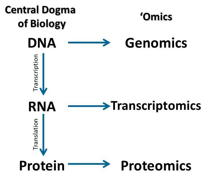 Dogma centrala în biologie