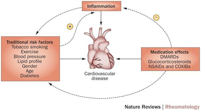 Efectul inflamației și al factorilor de risc CV în artrita reumatoidă