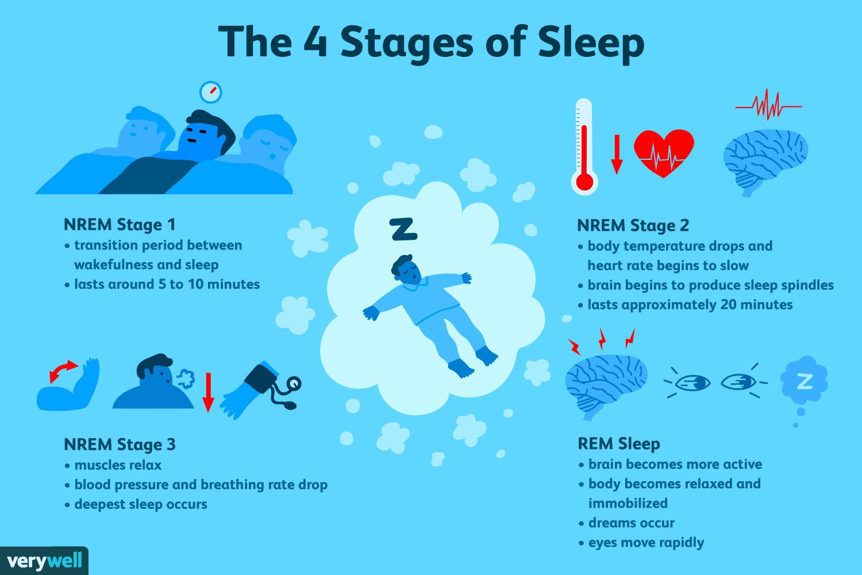 Fazele ciclului somnului