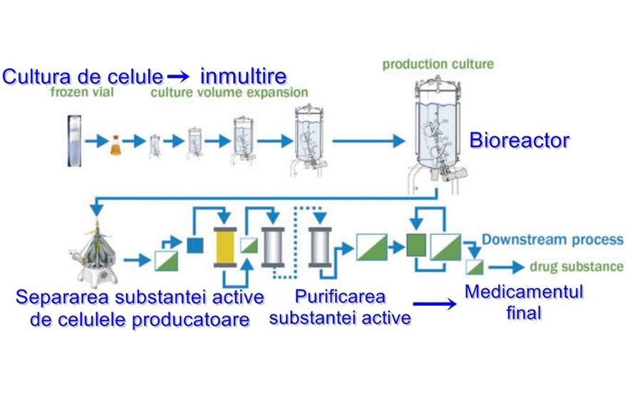 schema productie medicamente biologice