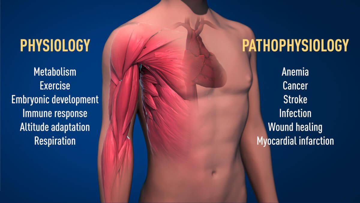 Variatiile oxigenului în situații fizologice și patologice