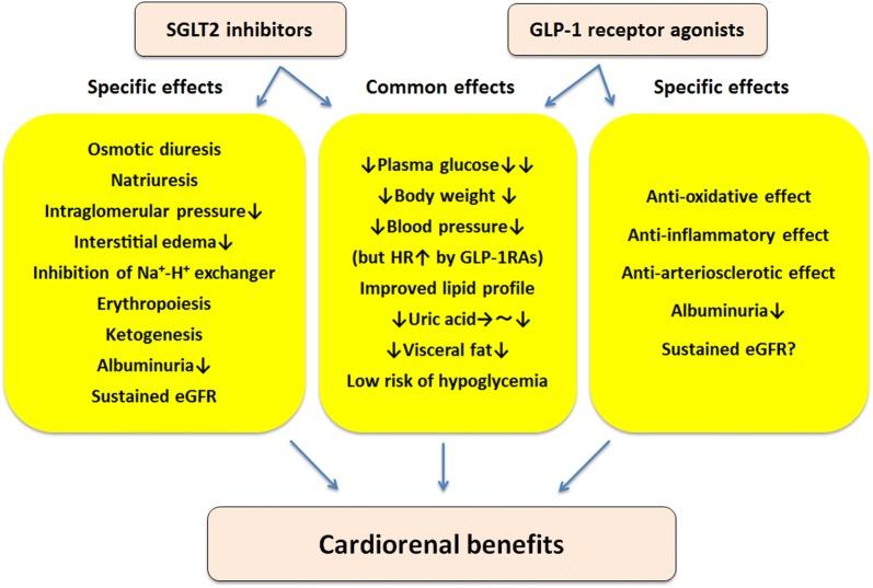 Inhibitorii SGLT2 și agoniștii GLP1
