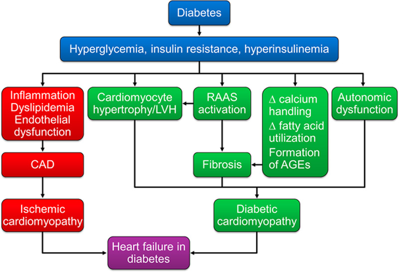 fiziopatologia insuficientei cardiace