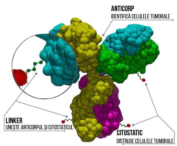 anticorp monoclonal conjugat structura 3d