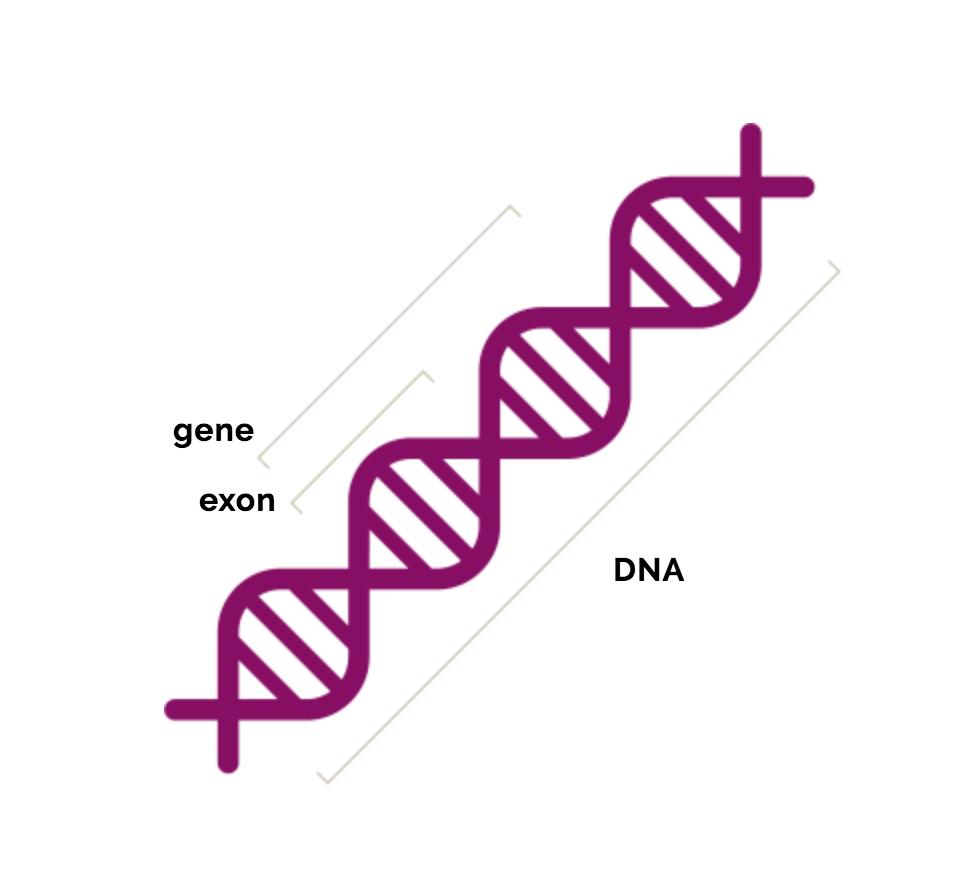 mecanisme în expresia genică