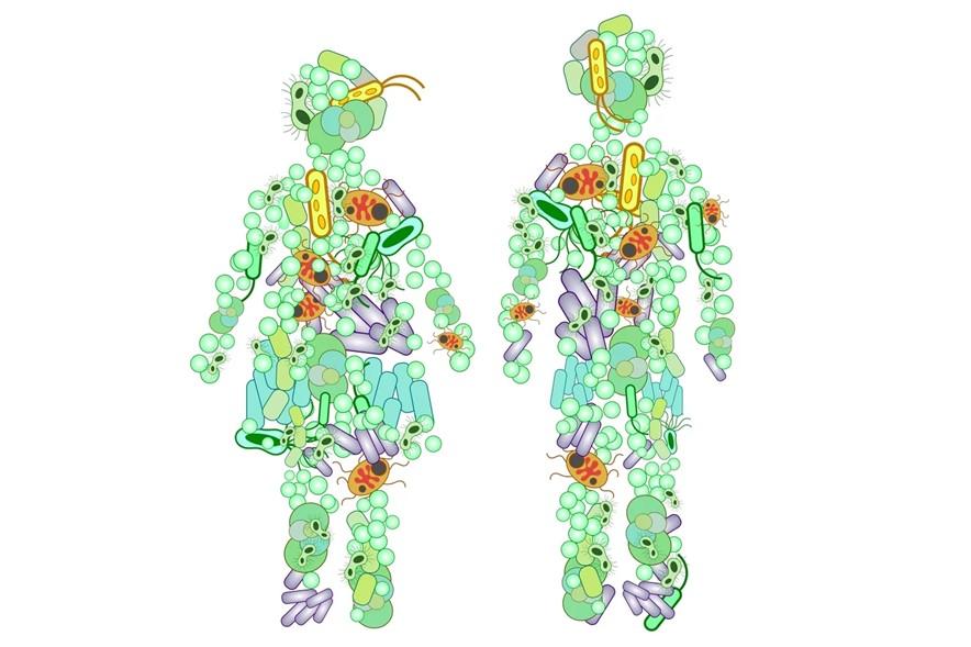 microbiom abundent organism uman