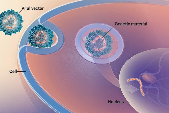 Terapia genica pentru hemofilia A și B