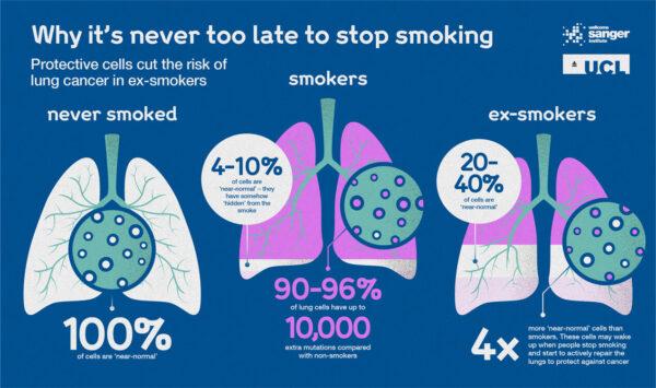 infografic studiu mutații adn foști fumători