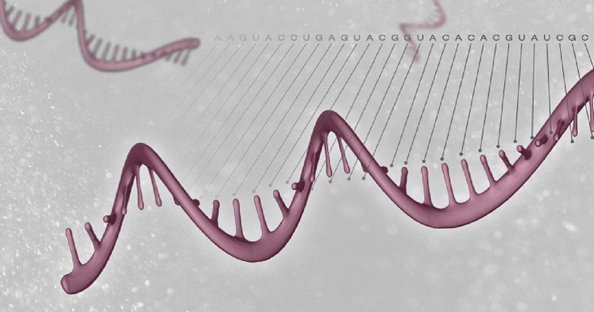 secvențierea moleculei de ARN