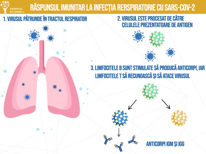 procesul prin care răspunsul imunitar ajută organismul să răspundă la virusul SARS-CoV-2
