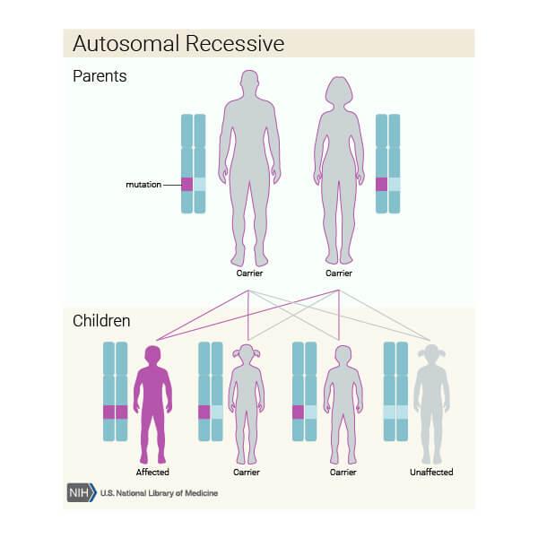 model de transmitere autozomal recesivă