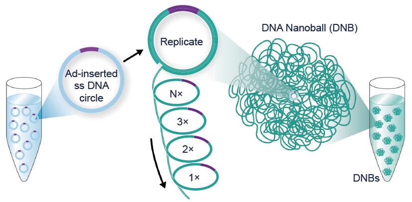 Secvențiere de nouă generație nanoball