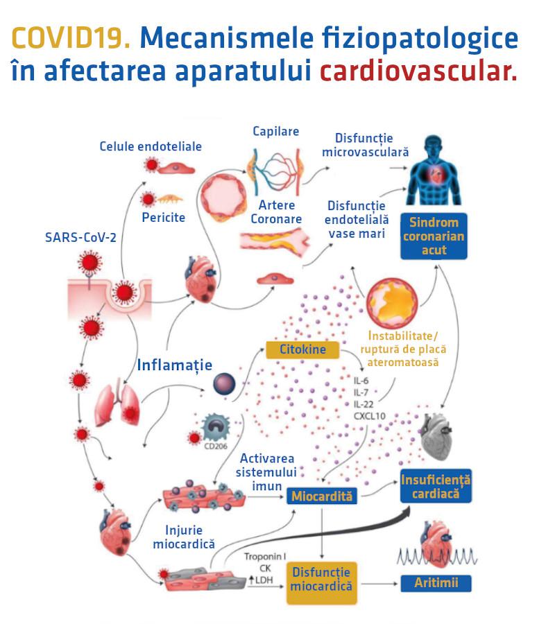 Fiziopatologia aparat cardiovascular COVID19