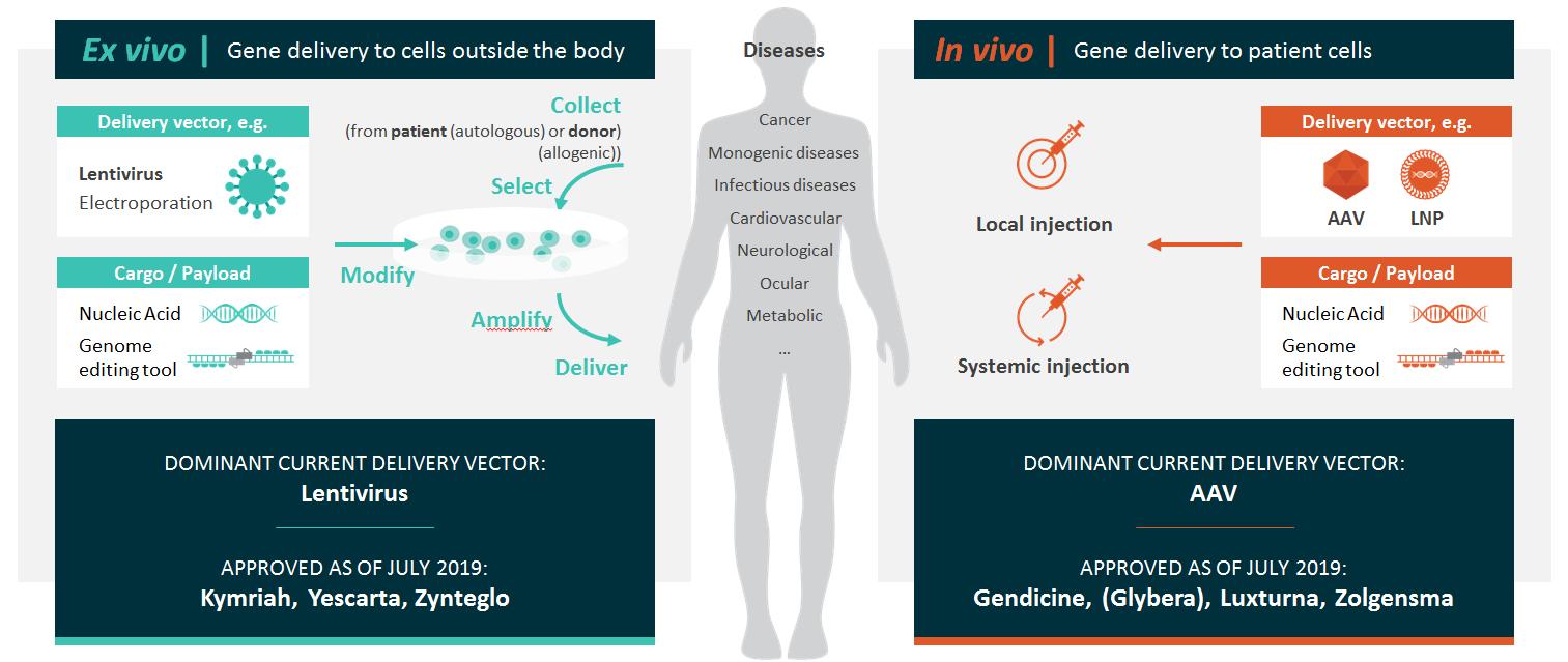 Clasificare terapii genice