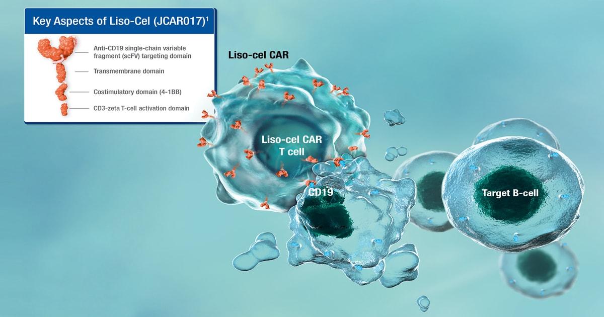 Liso-Cel componente și mecanism de acțiune