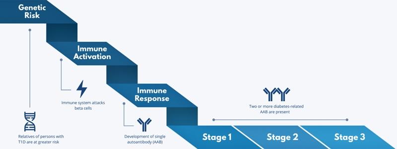 etape apariție diabet zaharat tip 1 risc genetic activare imunitară stadii anticorpi hiperglicemie simptome