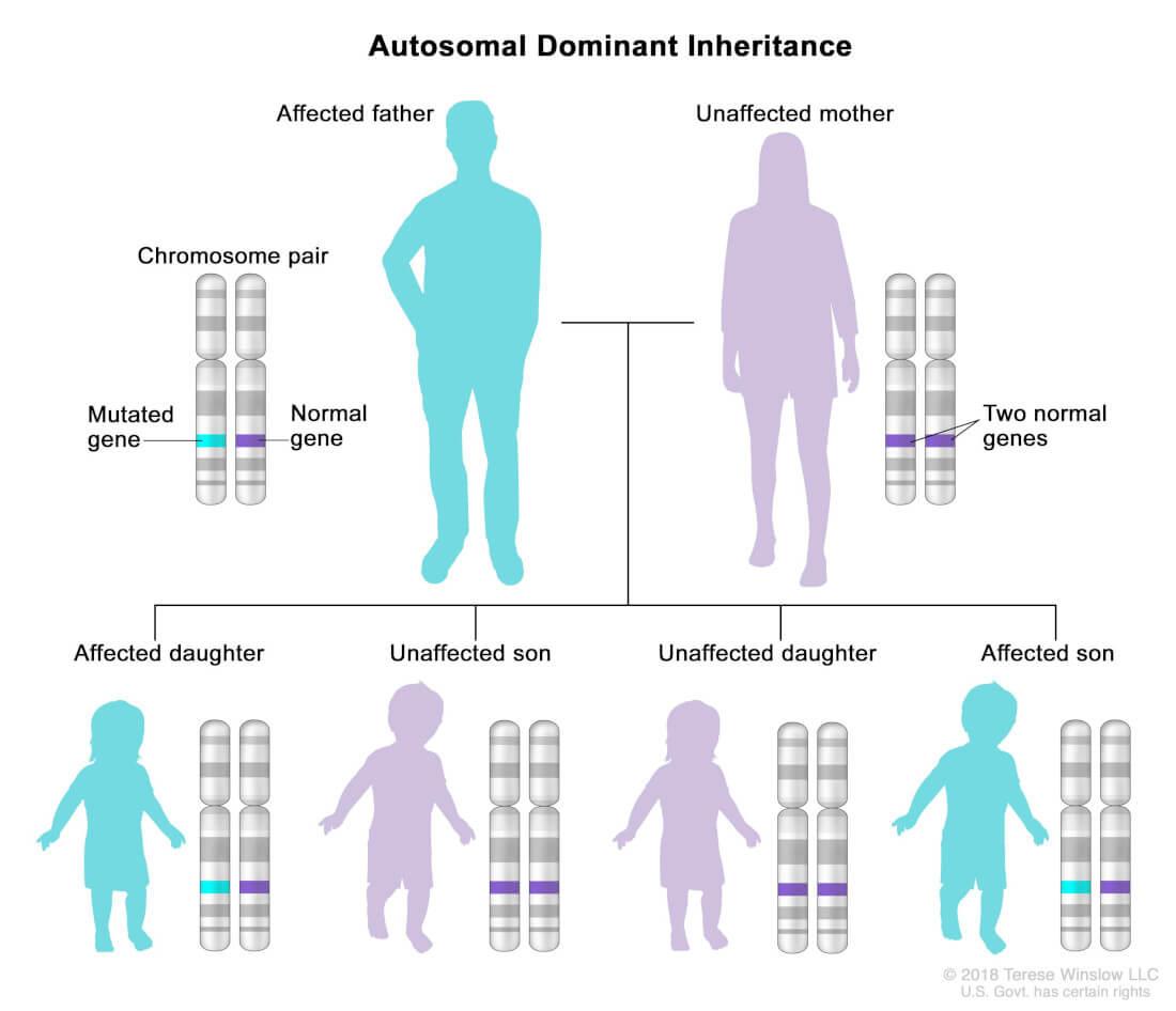 Transmitere autozomal dominanta