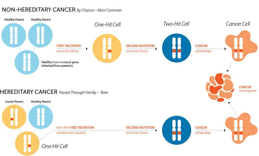 Cancere ereditare - mecanisme