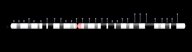 cromozomul X