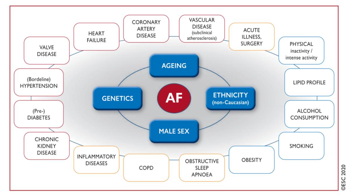 Factorii de risc pentru fibrilația atrială
