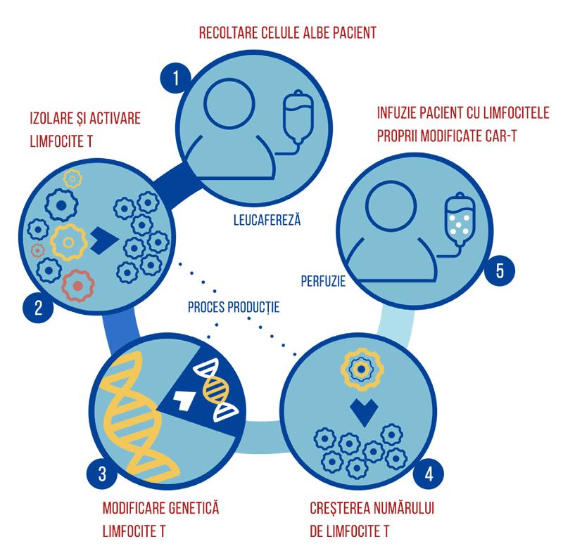 Proces producție terapii CAR-T de la recoltarea celulelor albe ale pacientului la administrarea terapiei.