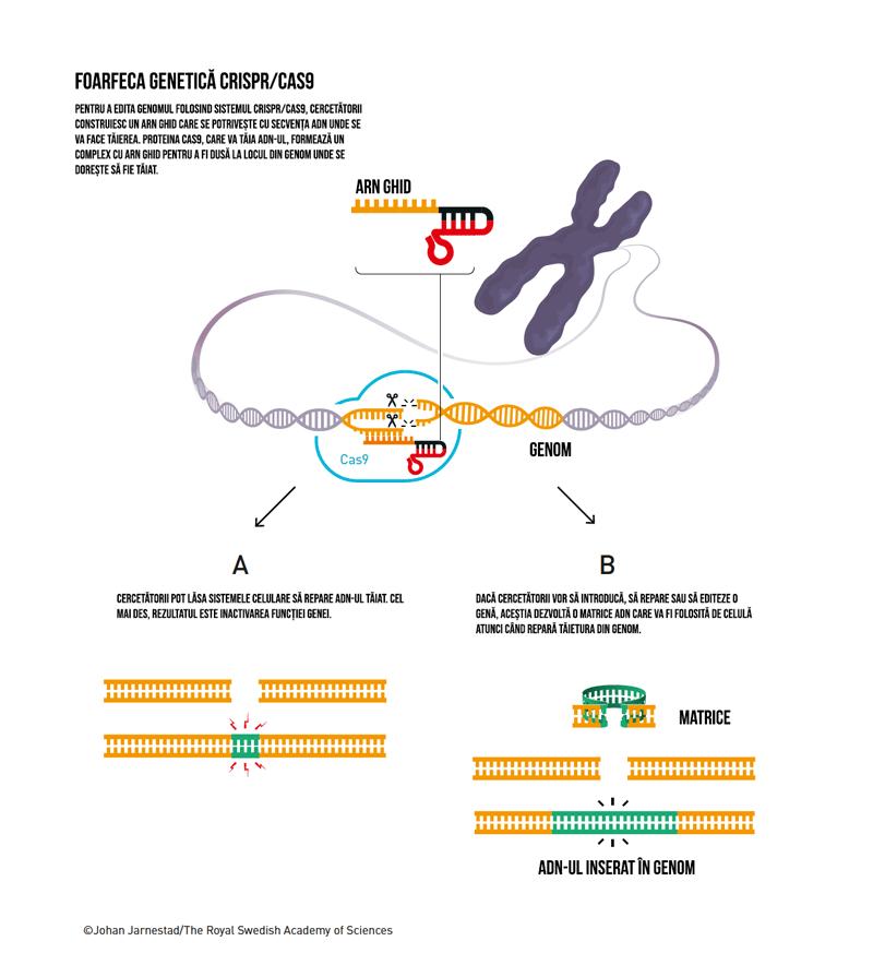 Foarfeca genetică CRISPR/Cas9