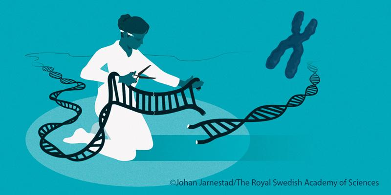 Premiul Nobel pentru Chimie 2020: dezvoltarea tehnologiei de editare genomică CRISPR-Cas9