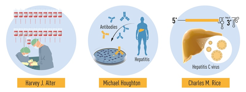 Descoperirile celor trei laureați ai Premiului Nobel pentru Medicină sau Fiziologie 2020: Descoperirea virusului hepatitic C