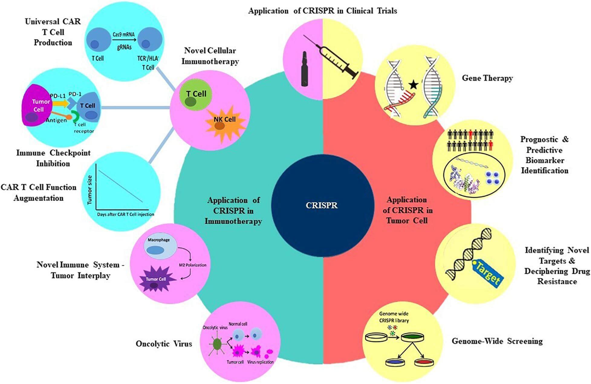 CRISPR oncologie aplicatii