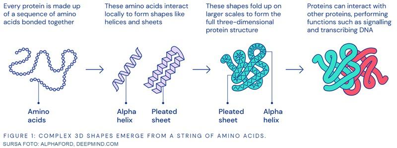 predicție structură terțiară proteine din secvență genetică alphaford deepmind deep learning inteligență artificială rețele neurale