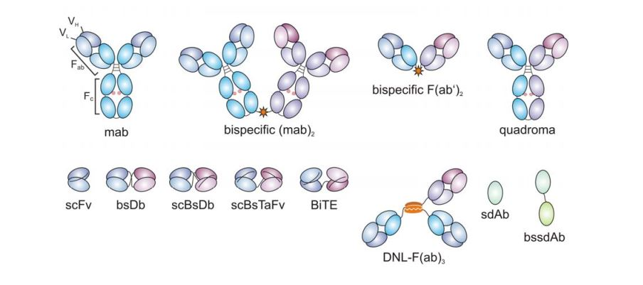 Tipuri anticorpi bispecifici