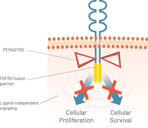 Pemazyre actiune fuziune FGFR2