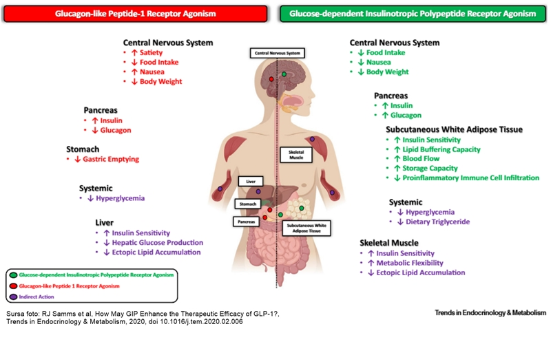 Agoniști receptor GLP1 și GIP - mecanism acțiune diabet zaharat
