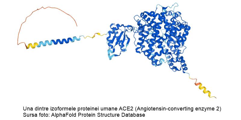 Baza date AlphaFold - instrument AI de rpezicere a structurii terțiare a proteinelor, pornind de la secvența aminoacidică