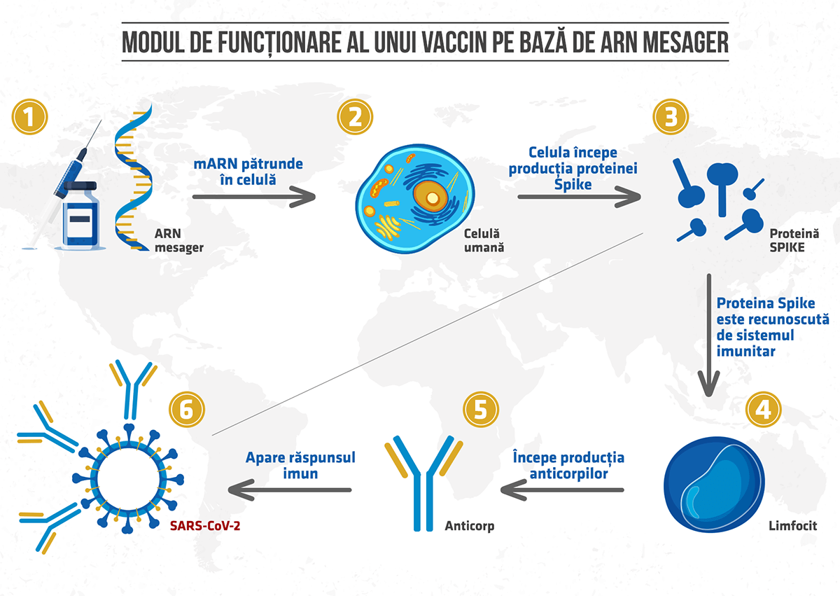 Cum funcționează ARNm