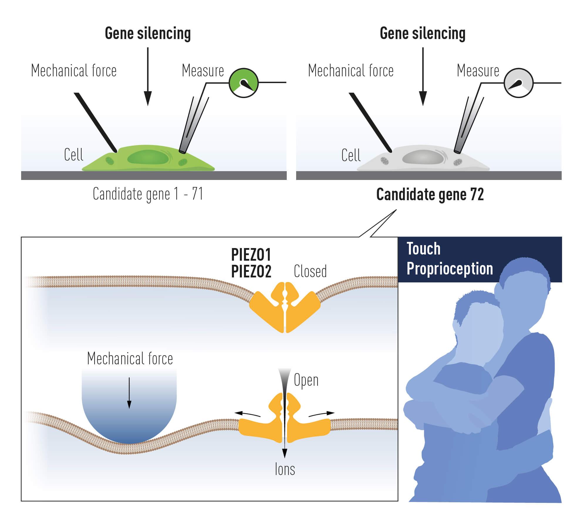 Premiu Nobel Fiziologie 2021